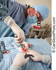 Veterinarian doing knee surgery on small dog - Veterinarian...