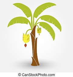 Banana tree isolated on a gray background with shadow....
