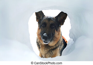 Avalanche Rescue Dog Finds a Survivor - If you are buried in...