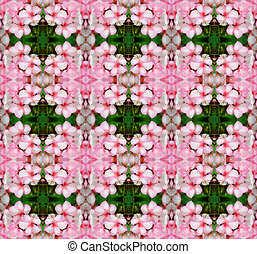 Pink bicolor geraniums seamless pattern background