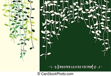 Creeper leaves isolated - Isolated tropical creeper leaves...