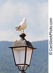 seagull with menacing look