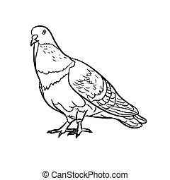 Drawing of pigeons