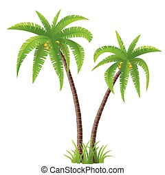 Palm trees - Two coconut palm trees isolated on white...