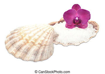 Orchid on a seashell with sea salt,spa decor