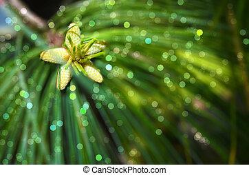 Himalayan pine tree close up detail