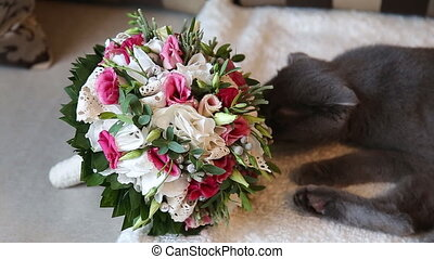 cat sniffing weddibg bouquet fold