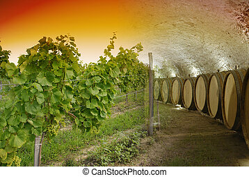 Wine cellar and winery - Old wine cellar with barrels and...