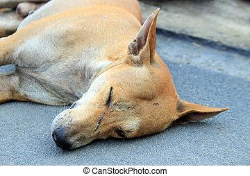 stray dog sleep on the ground - close up face of stray dog...