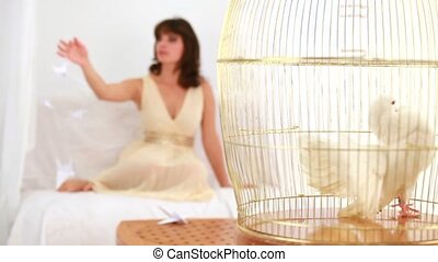 One White Messenger-pigeon In Cage - The golden cage white...