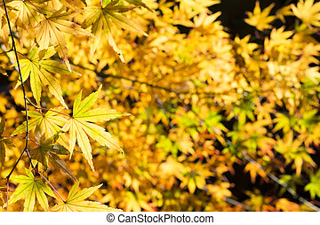 Yellow and green leaves - Autumn mix of yellow and green...