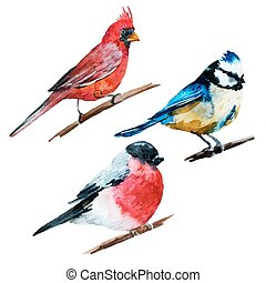 Watercolor birds - Beautiful vector image with nice...