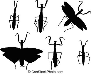 mantis collection - vector