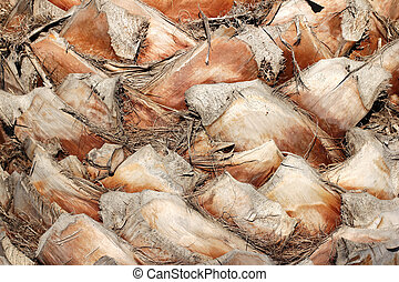 Palm Tree Bark - Closeup view of upper trunk detail of old...