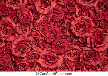 Red roses background - Beautiful red roses background