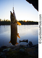 big pike turbulent water fishing - pike fishing big Northern...