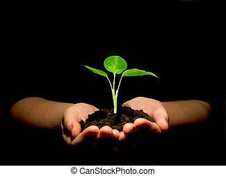 plant in hands - Hands holdings a little green plant on a...