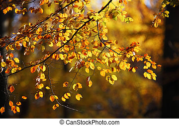 colors of autumn - the warm colors of autumn are knocking on...