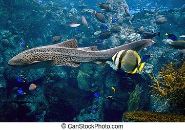 eel swimming in the ocean