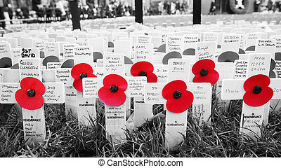Remembrance day display in Westminster Abbey - Remembrance...