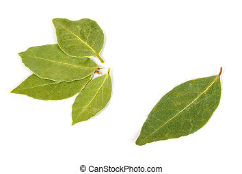 bay leaf -  dried bay leaf isolated on white