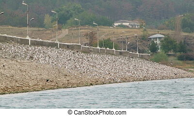 Flock Of Birds On Slope - This shot was taken at dull day In...