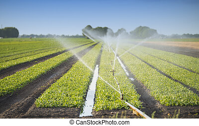 watering crops - irrigation at the field
