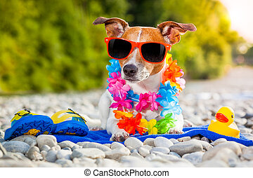 summer beach dog - jack russell dog with a summer rubber...