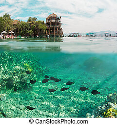 two worlds: underwater and above waterin one picture