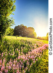 Summer landscape with blooming fireweed flowers Chamerion...