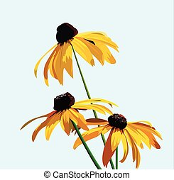 flower rudbeckia - Rudbeckia flower on a background of blue...