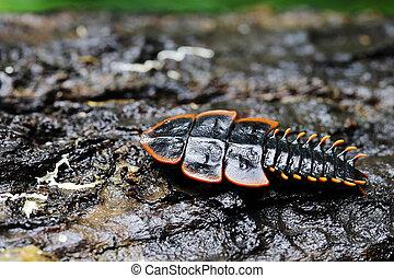 Firefly or Lightning bug in rainforest phuket Thailand