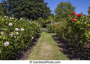 Queen Marys Gardens in Regents Park, London - A beautiful...