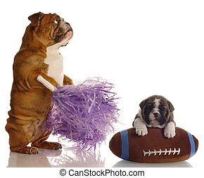 english bulldog cheerleader standing beside puppy sitting on...