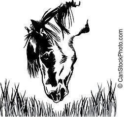 Horse feeding on grass illustration