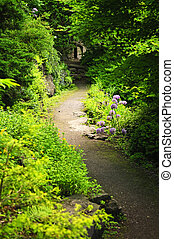 Forest path - Hiking trail in a sunlit forest in Ontario...