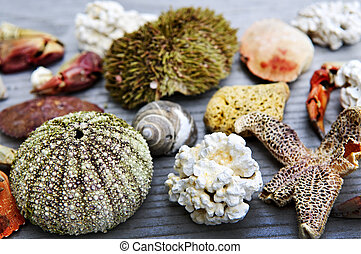 Sea treasures - Different types of marine life from Atlantic...