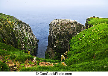 Clilffs at Cape St. Mary\'s Ecological Bird Sanctuary -...