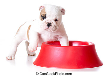 hungry puppy