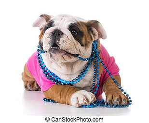 female puppy - bulldog wearing pink shirt and blue necklace...