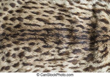 Leopardo, piel, textura, y, Plano de fondo,