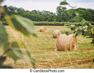 Haybales - Image of haybales in a field. Swedish...