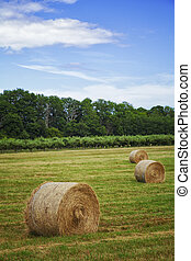 Haybales in a field - Image of haybales in a field Osterlen,...