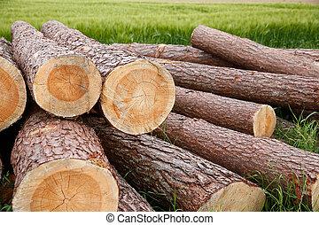 Tree trunks lying in the field
