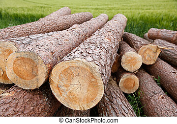Tree trunks lying in the green field