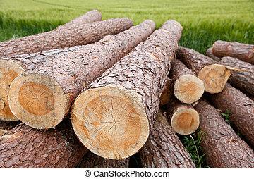 Tree trunks lying in the green field