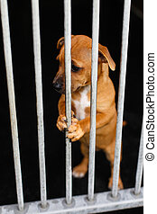 Sad dog with in a cage behind bars