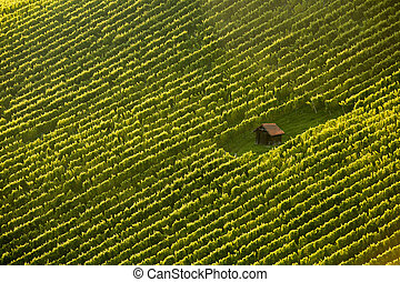 Wineyard cottage amidst vine rows - Wineyard cottage amidst...