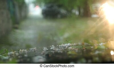 Cars Stopped Under a Tree Waiting When Stop Large Hail -...