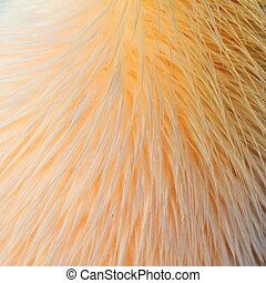texture of great pelican feathers - interesting texture of...